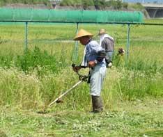 草刈りの様子